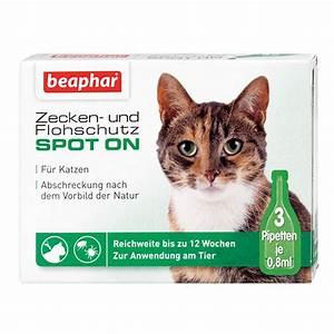 Verkleidung Für Katzen : beaphar zecken flohschutz spot on f r katzen bei zooroyal ~ Frokenaadalensverden.com Haus und Dekorationen
