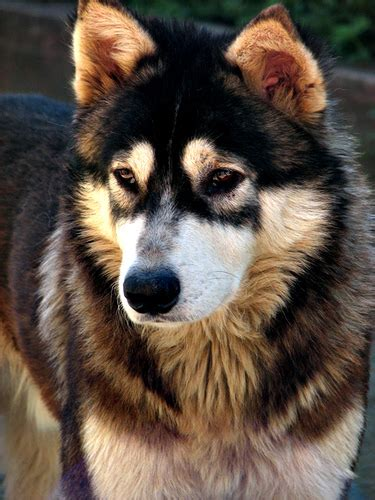 Unknown Dog Sosing Askal This Dog Strayed In Our