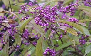 Heidelbeeren Pflanzen Zeitpunkt : 25 best lavendel images on pinterest lavender garden and garden ideas ~ Orissabook.com Haus und Dekorationen