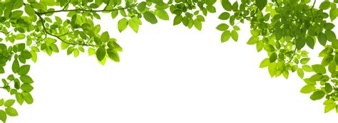 Tree Wallpaper Png by Green Transparent Png Pictures Free Icons And Png