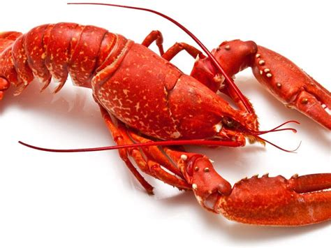 cuisiner un homard congelé homard recettes de homard cuisine actuelle