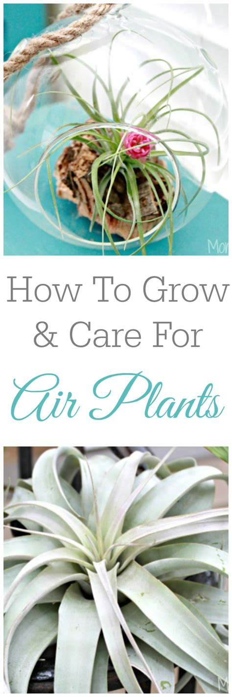 how to care for a plant how to care for a fiddle leaf fig plant mom 4 real