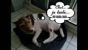 Video Pour Chien : diy faire un coussin pour chien youtube ~ Medecine-chirurgie-esthetiques.com Avis de Voitures