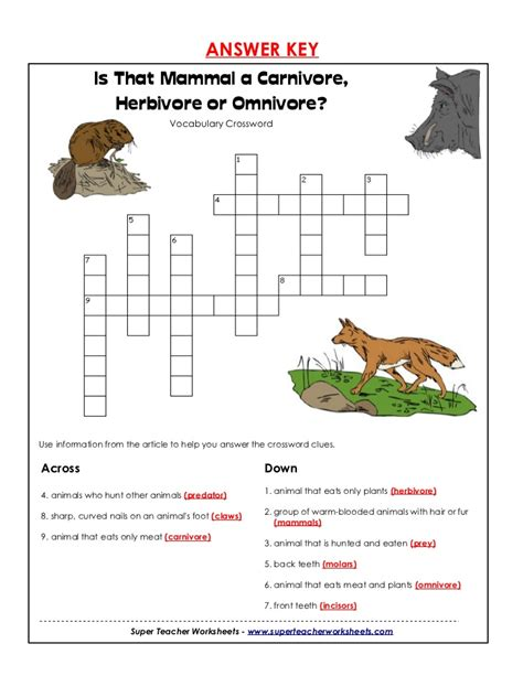 omnivore carnivores herbivores omnivores carnivore herbivore worksheets mammal key 4th human answer horse teacher super