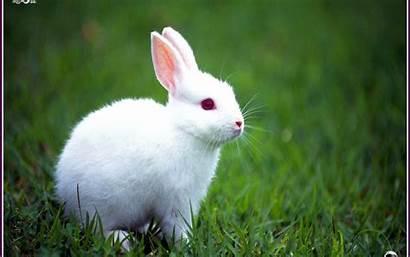 Rabbit Animal Bunny 1920 1200 Animales Walldiskpaper