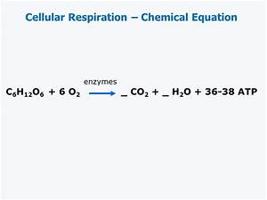 Overall Chemical Equation For Aerobic Cellular Respiration ...