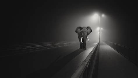 wallpaper elephant night dark background highway black