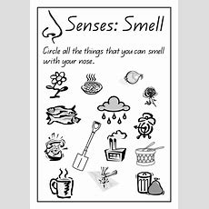 Sense Of Hearing Activities  Tags Captain , Senses , Worksheetsindd20104924953  Five Senses
