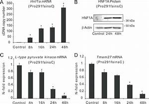 Induction Of Hnf1a Gene Expression In Pro291fsinsc