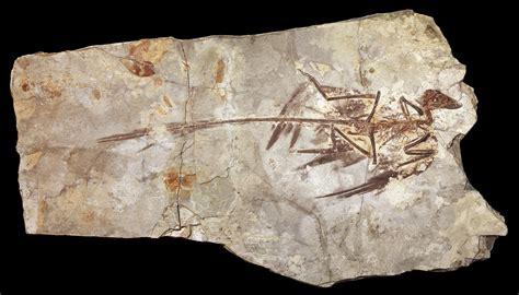iridescent feathered dinosaur offers fresh evidence