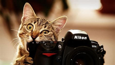 Funny Wallpapers 1920x1080