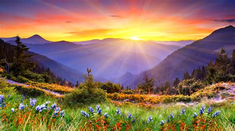 Mountains Flowers Sunrise Wallpaper 2560x1440 523996