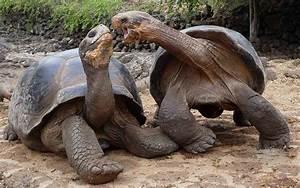 Galapagos Islands: Darwin Inspiration - PRE-TEND Be curious