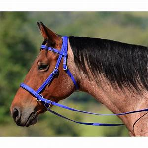 A Harness Bridle On Horse, A, Get Free Image About Wiring ...