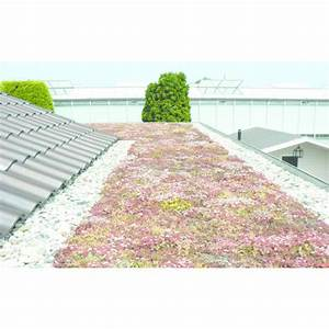 Toiture Terrasse Inaccessible : syst me de v g talisation extensive l ger pour toitures inaccessibles urbanscape greenroof ~ Melissatoandfro.com Idées de Décoration