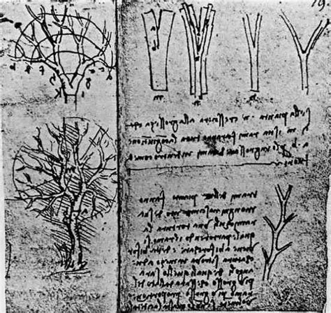 explanation found for leonardo da vinci s tree rule