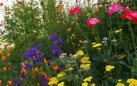 flowers for a cottage garden meer dan 1000 afbeeldingen over cottage gardens op pinterest cottage tuinen vaste planten