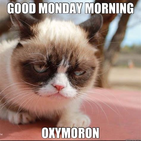 Grumpy Cat Good Morning Meme - enlightened matriarch its monday enjoy some humor