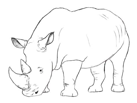 draw  rhino draw central animal drawings
