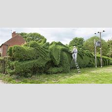 Elderly Man Spent 10 Years Turning 150ftlong Hedge Into