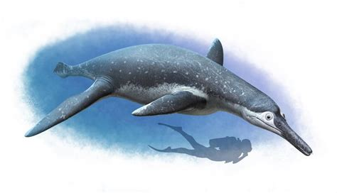 Strange 'spirit Of The Water' Reptile From Dinosaur Age