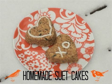 how to make suet cakes for birds