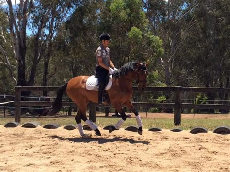 andalusian spanish horses horse mare horsezone