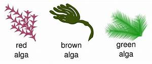 Three Types Of Algae