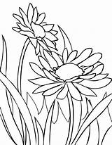 Coloring Daisy Flower Spring Flowers Colouring Daisies Fence Sheets Colorluna Printable Sun Colorful sketch template