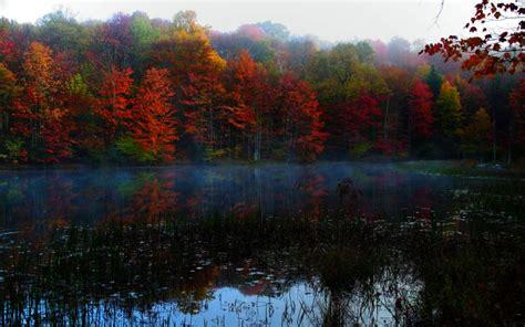 hd autumn fog wallpaper