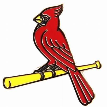 Cardinals Louis St Blues Clipart Lapel Bird