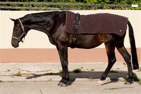 Bodenarbeit Pferd Muskelaufbau