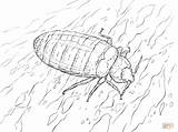 Coloring Bed Bug Printable Drawing sketch template