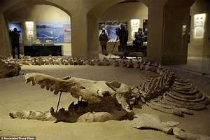 Egypt unveils rare whale fossil museum to boost tourism ...