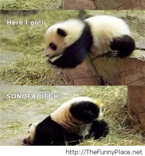 Sex Panda Meme - funny panda pics funny pictures awesome pictures image 1124895 by thefunnyplace on favim com