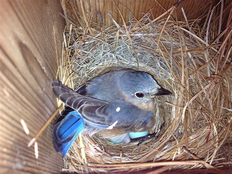 bluebird trail posts skidaway audubon skidaway audubon