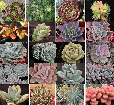types of succulents eleven twenty five eleven mvp most valuable project