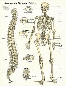 Human Structure Uc5d0  Uc788 Ub294  Ud540