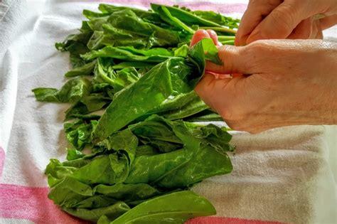 cuisiner oseille mariatotal l 39 oseille la préparer
