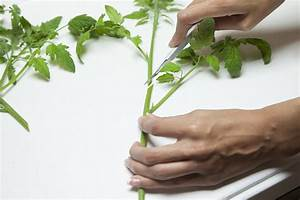 Beginner Plant Propagation Easy Guide
