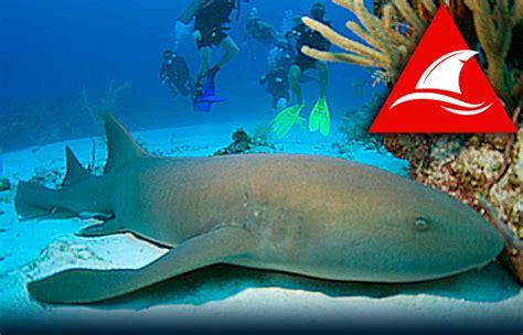 requin dormeur dangers de l 201 t 201 4 comment 233 viter les attaques de
