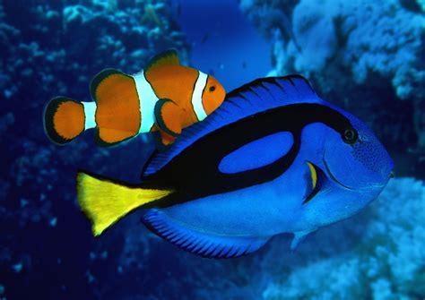 real fish  nemo  dory  sea life london