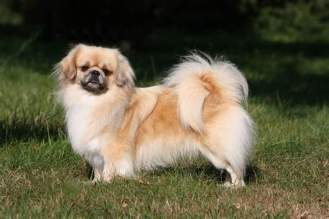 gezelschapshonden honden test