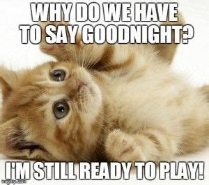 Funny Goodnight Memes - the 25 best funny goodnight ideas on pinterest funny cats funny stuff and funny fails