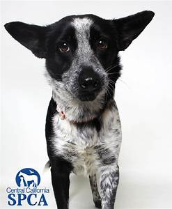 Rowena is a 2 year old, female, black and white ...