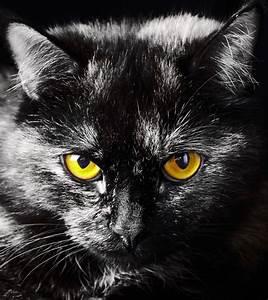 Schwarz Weiß Kissen : fototapete katze tier augen schwarz wei gelb 180x202cm ~ Frokenaadalensverden.com Haus und Dekorationen