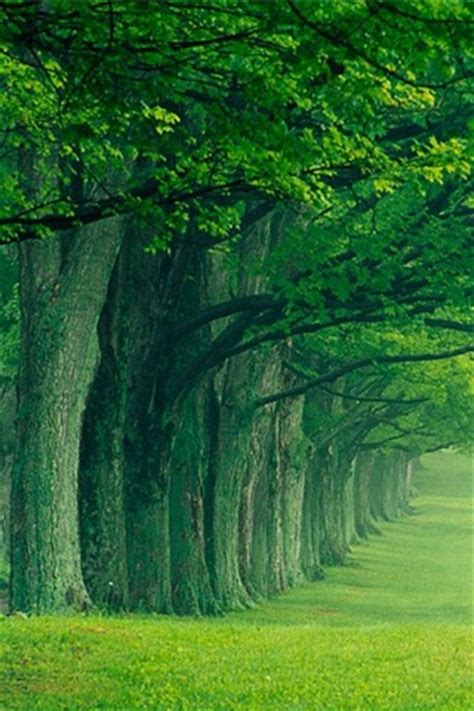 Trees Nature Landscape Iphone Wallpapers 320x480 Hd