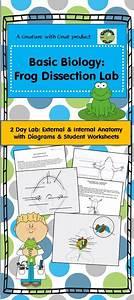 Basic Biology  Frog Dissection Laboratory