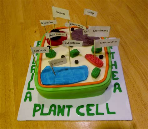 plant cell biology homework plant cell model edible
