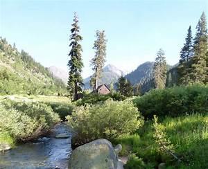 California, Native, Plants, Design, A, Beautiful, Drought